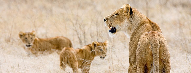 Tanzania 2007 Wildlife Photos