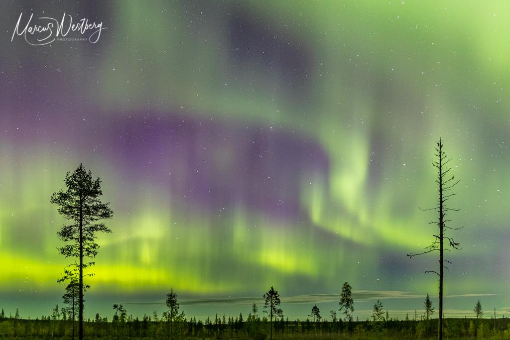 Aurora by Marcus Westberg