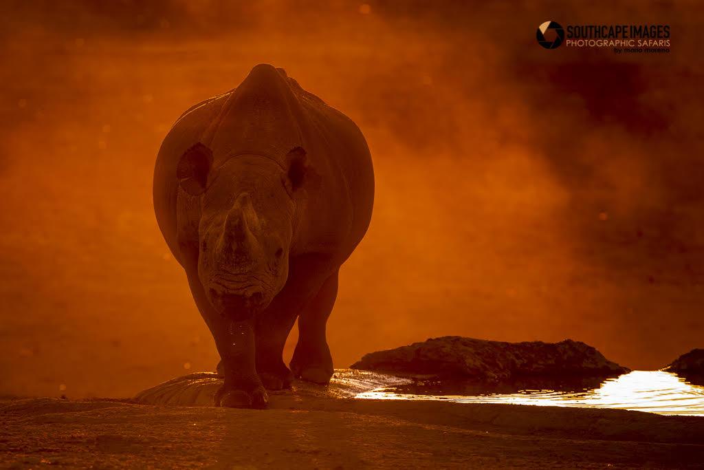 Black rhino by Mario Moreno
