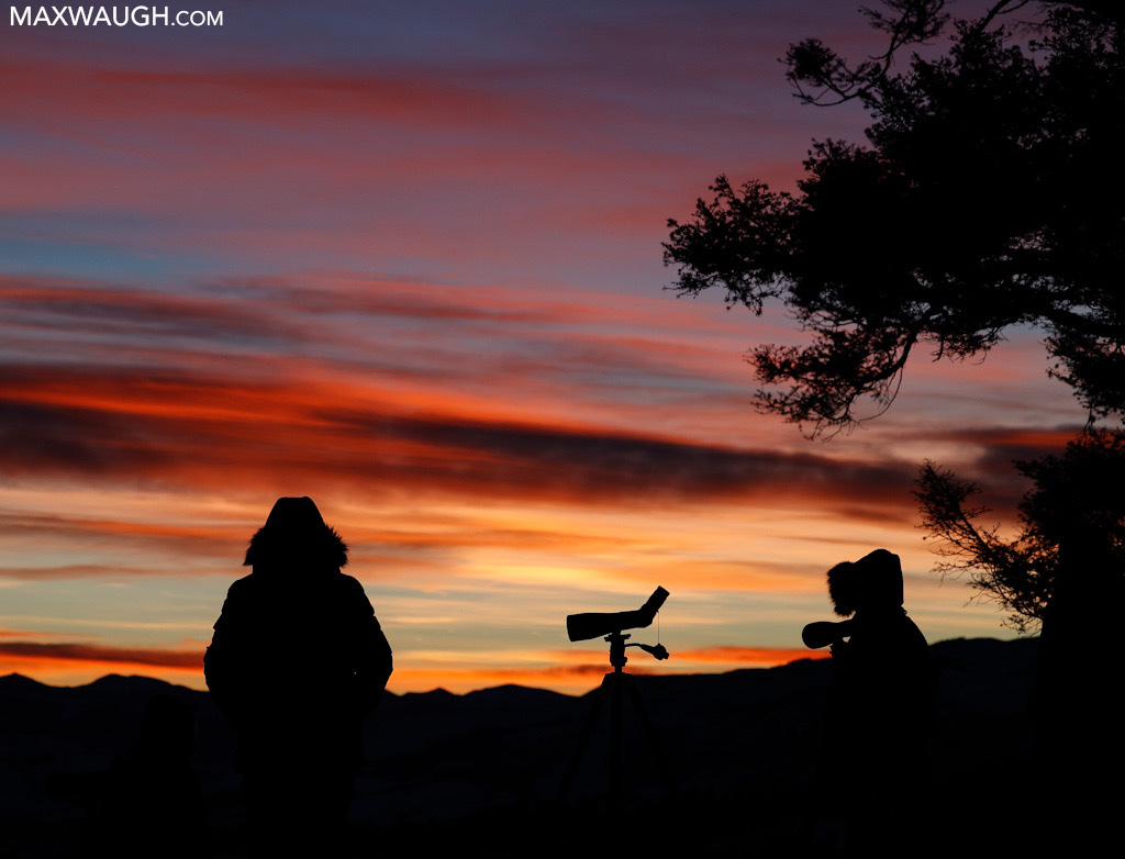 Wolf watching at sunrise