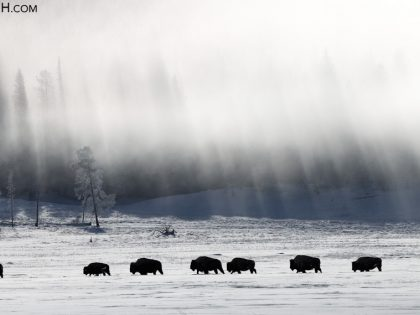 Yellowstone Winter 2021 Trip Report, Days 8 – 10