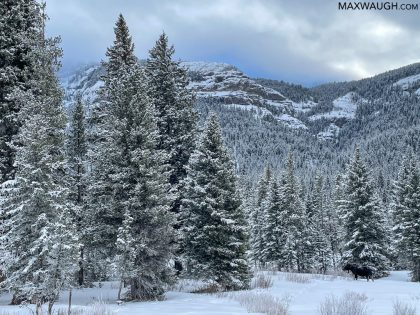 Yellowstone Winter 2021 Trip Report, Days 13 – 14