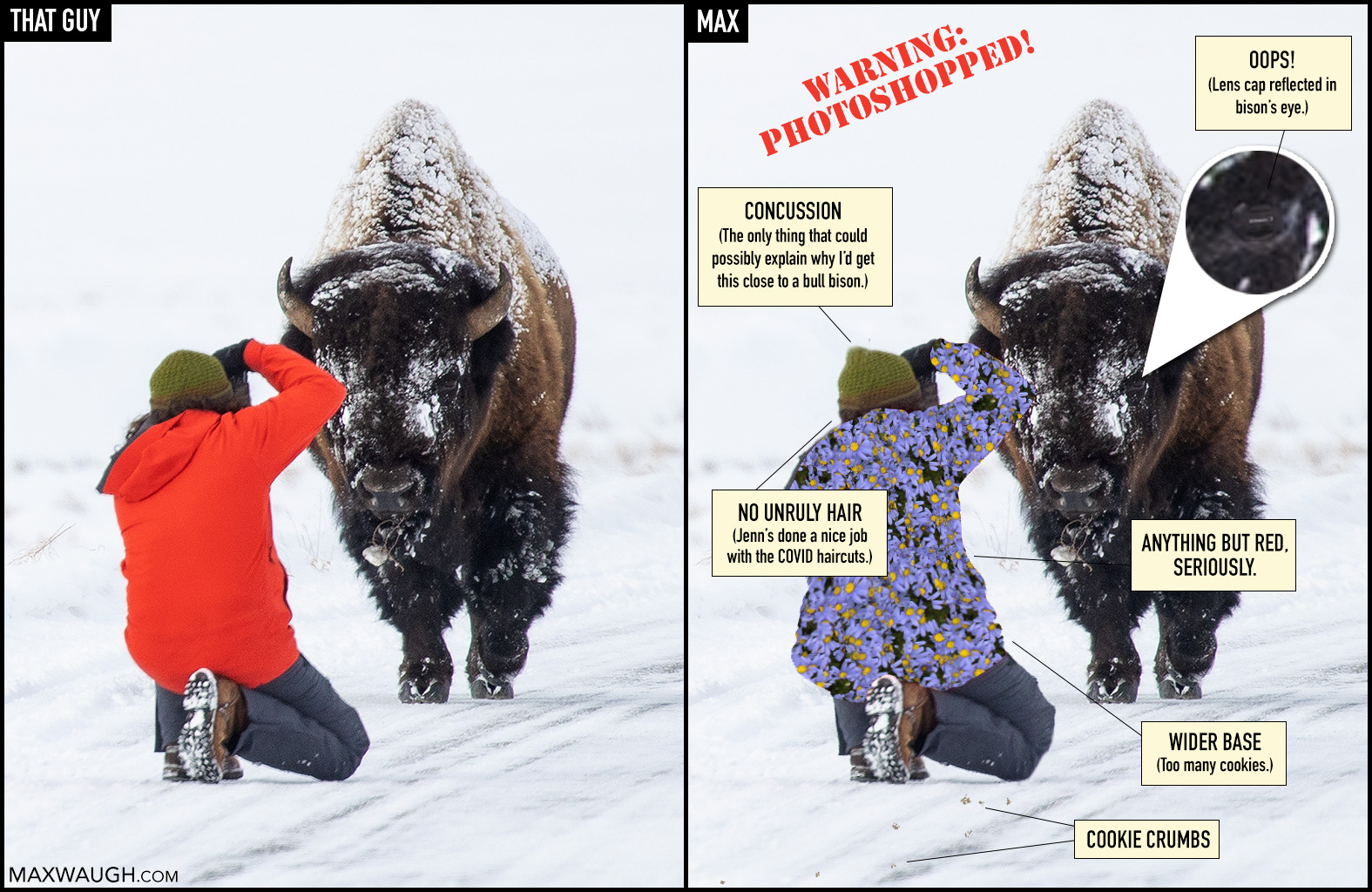 Bison and photographer