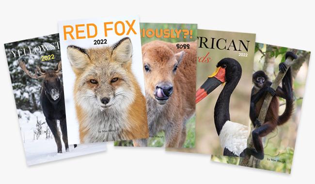 2022 Nature and Wildlife Calendars