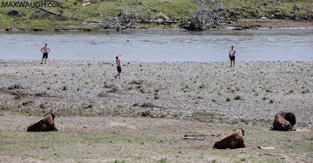 Playing football near bison