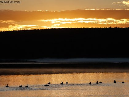 Yellowstone Spring 2021 Trip Report, Days 5 & 6