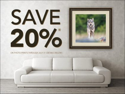 Summer Sale: Discounts on Photo Prints and 2022 Calendars