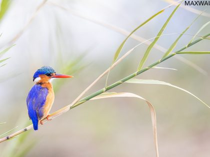 New Photos: South Africa 2021 Birds