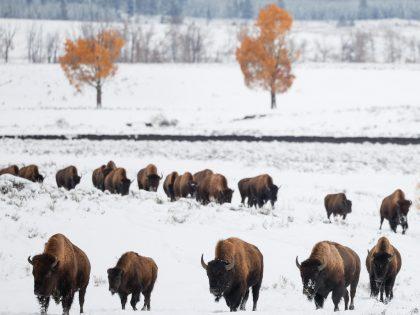 Yellowstone Fall 2021 Trip Report: Days 0 – 1