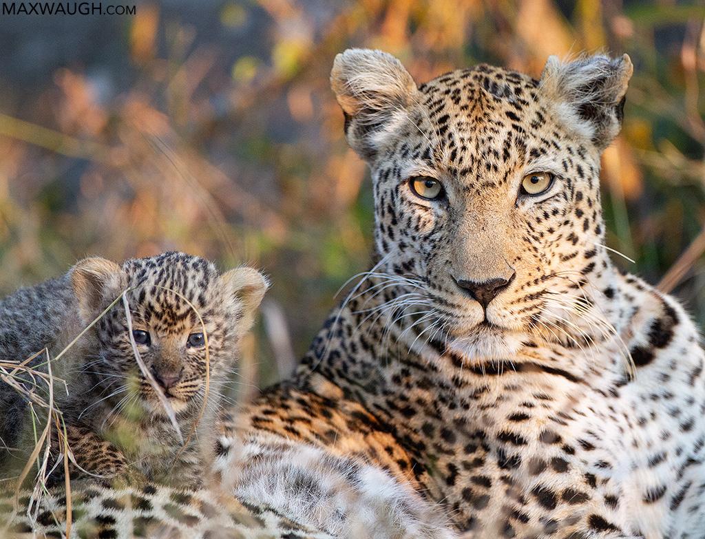 Jakkalsdraai Female and Cub
